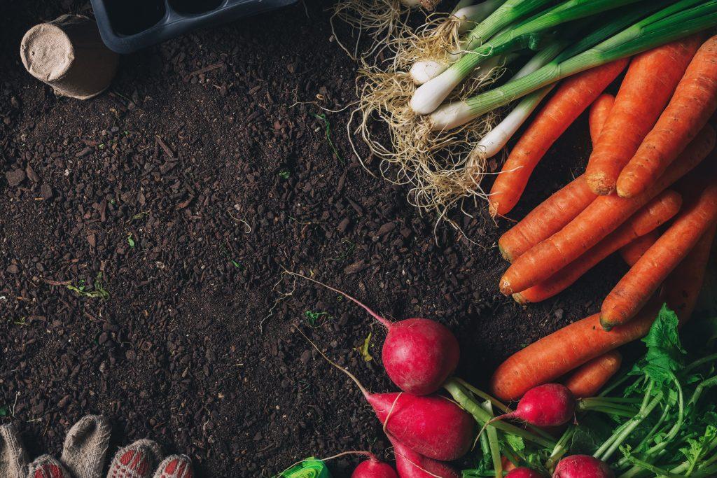 Organic Soil Vegetable Garden Florida