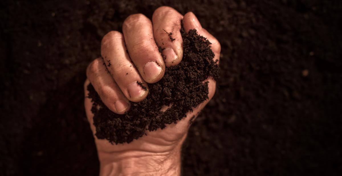Soil in hand Garden FL