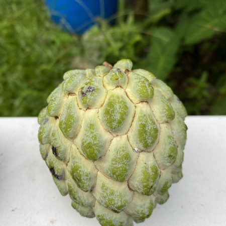 Lessard_Thai_Sugar_Apple
